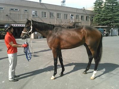 b45fc2496380 佐野厩舎ブログ » 2015 HBAトレーニングセール